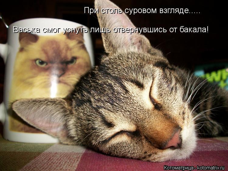 Котоматрица: При столь суровом взгляде..... Васька смог уснуть лишь отвернувшись от бакала!