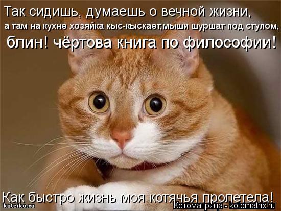 Котоматрица: Так сидишь, думаешь о вечной жизни, а там на кухне хозяйка кыс-кыскает,мыши шуршат под стулом, блин! чёртова книга по философии! Как быстро жи