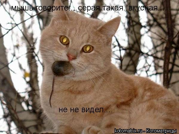 Котоматрица: мышь говорите....серая такая..вкусная.... не не видел....