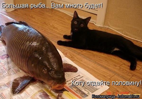Котоматрица: Большая рыба.. Вам много будет!   Коту отдайте половину!