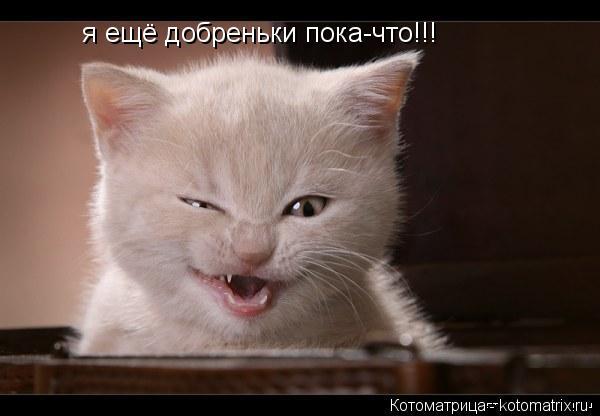 Котоматрица: я ещё добреньки пока-что!!!