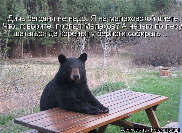 Котоматрица: -Дичь сегодня не надо. Я на малаховской диете. Что, говорите, пропал Малахов? А нечего по лесу шататься да коренья у берлоги собирать...