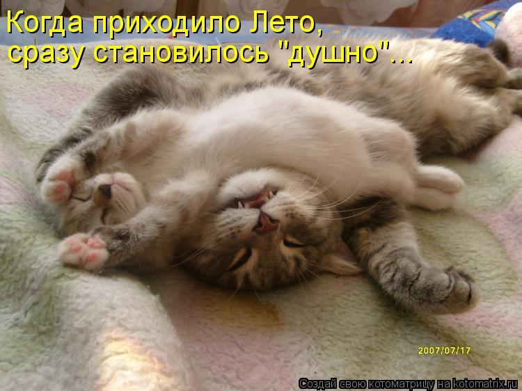 "Котоматрица: Когда приходило Лето, сразу становилось ""душно""..."