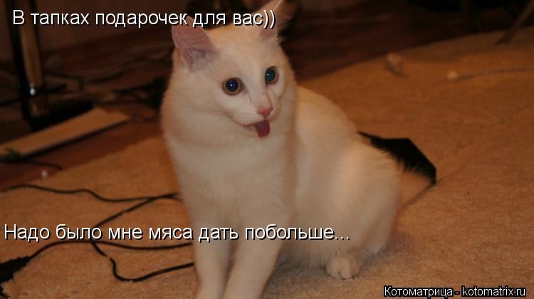 Котоматрица: В тапках подарочек для вас)) Надо было мне мяса дать побольше...
