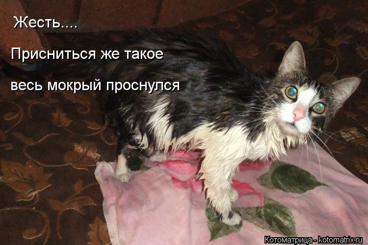Котоматрица: Жесть.... Присниться же такое весь мокрый проснулся