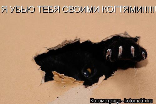 Котоматрица: Я УБЬЮ ТЕБЯ СВОИМИ КОГТЯМИ!!!!!!