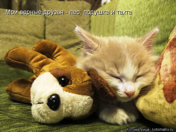 Котоматрица: Мои верные друзья - пес, подушка и тахта