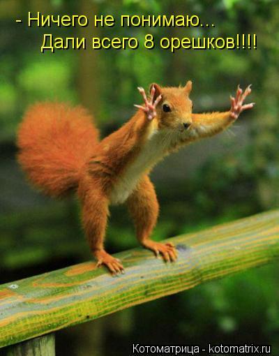 Котоматрица: - Ничего не понимаю... Дали всего 8 орешков!!!!