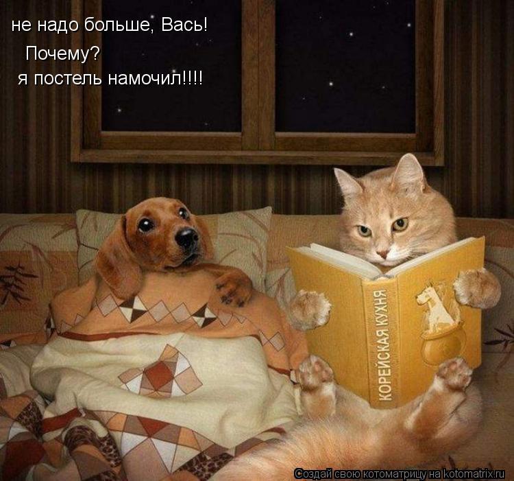 Котоматрица: не надо больше, Вась! Почему? я постель намочил!!!!