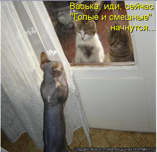 """Котоматрица: Васька, иди, сейчас  """"Голые и смешные"""" начнутся..."""