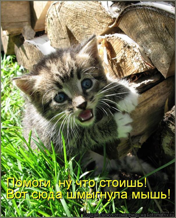 Котоматрица: Вот сюда шмыгнула мышь! Помоги, ну что стоишь!