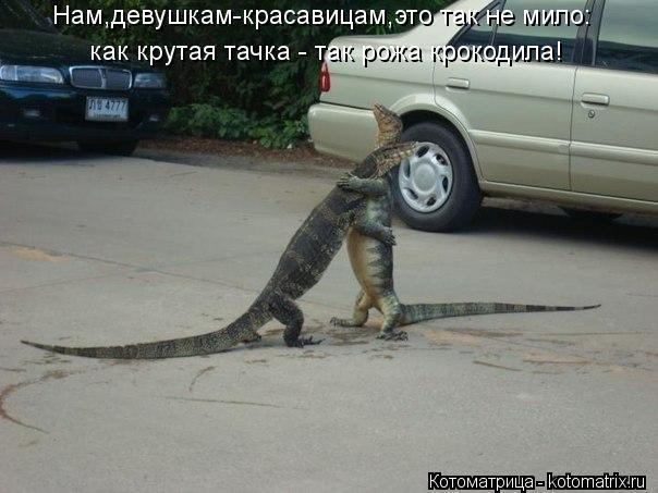 Котоматрица: Нам,девушкам-красавицам,это так не мило: как крутая тачка - так рожа крокодила!