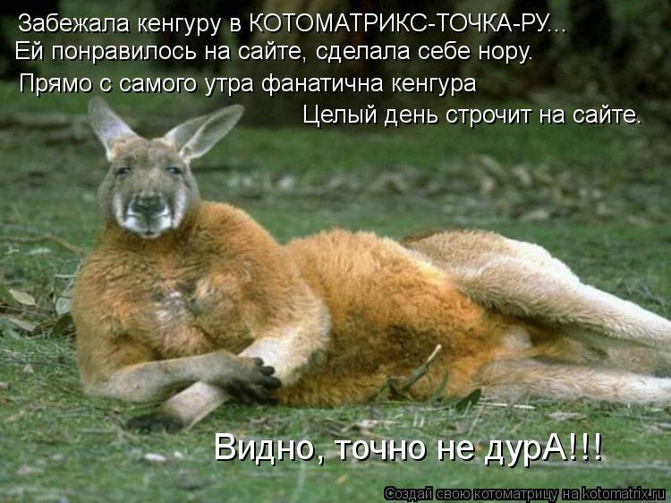 Котоматрица: Забежала кенгуру в КОТОМАТРИКС-ТОЧКА-РУ... Ей понравилось на сайте, сделала себе нору. Прямо с самого утра фанатична кенгура  Целый день стро