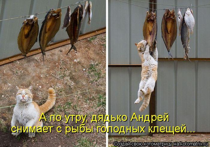 Котоматрица: А по утру, дядько Андрей снимает с рыбы голодных клещей...