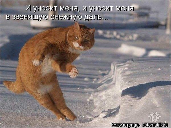 Котоматрица: И уносит меня, и уносит меня в звенящую снежную даль...