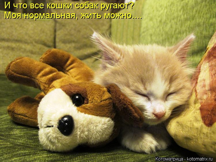 Котоматрица: И что все кошки собак ругают? Моя нормальная, жить можно....