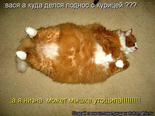 Котоматрица: :вася а куда делся поднос с курицей ??? :а я низна  может мышка утощила!!!!!!!!!