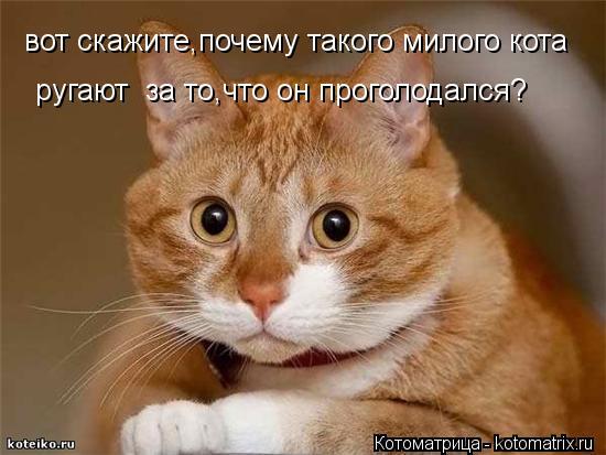 Котоматрица: вот скажите,почему такого милого кота ругают  за то,что он проголодался?