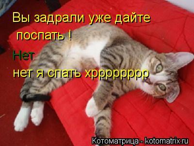 Котоматрица: Вы задрали уже дайте   поспать ! Нет нет я спать хрррррррр