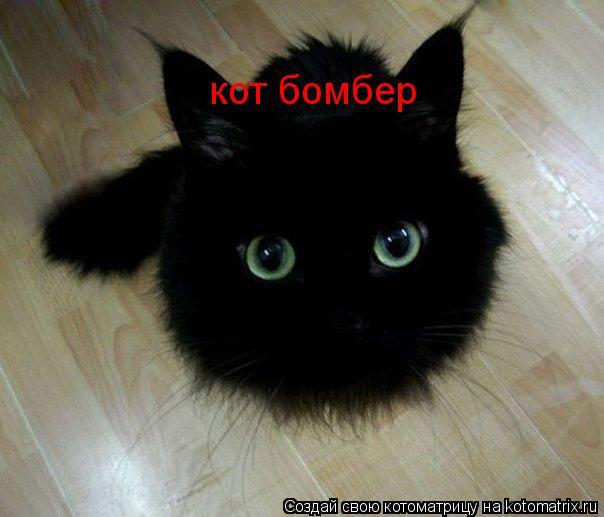 Котоматрица: кот бомбер