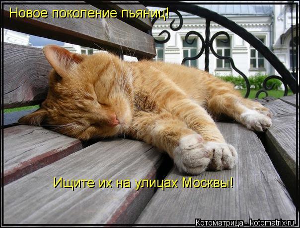 Котоматрица: Новое поколение пьяниц! Ищите их на улицах Москвы!