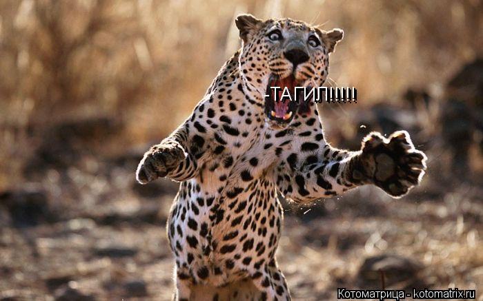 Котоматрица: ТАГИЛ!!!!! -ТАГИЛ!!!!!