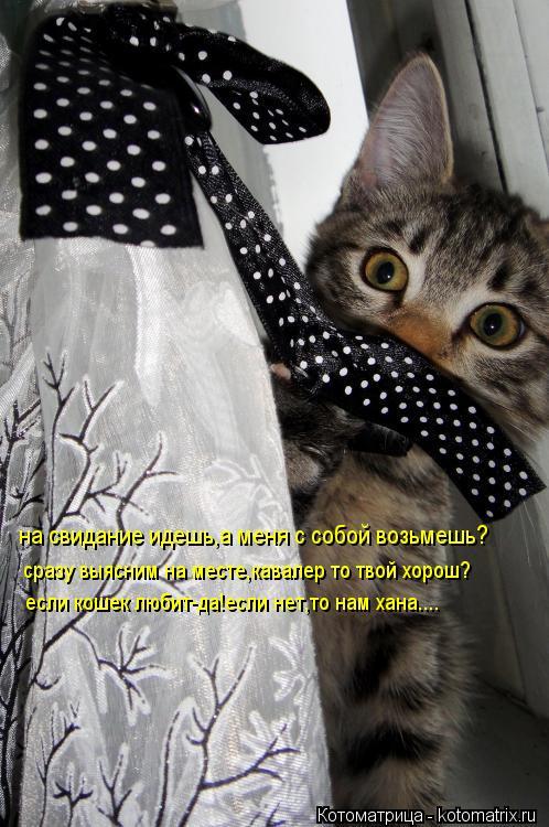 Котоматрица: на свидание идешь,а меня с собой возьмешь? сразу выясним на месте,кавалер то твой хорош? если кошек любит-да!если нет,то нам хана....