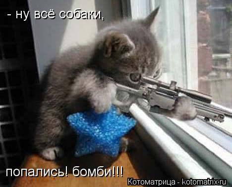 Котоматрица: попались! бомби!!! - ну всё собаки,