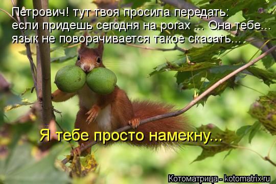 Котоматрица: Я тебе просто намекну... Петрович! тут твоя просила передать: если придешь сегодня на рогах ... Она тебе... язык не поворачивается такое сказат