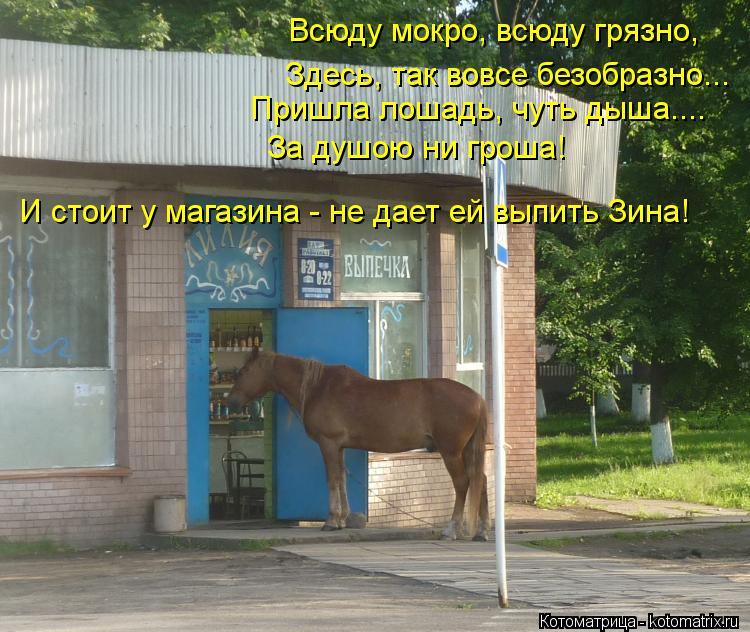 Котоматрица: Всюду мокро, всюду грязно, Здесь, так вовсе безобразно... Пришла лошадь, чуть дыша.... За душою ни гроша! И стоит у магазина - не дает ей выпить З