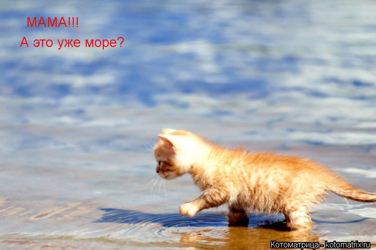 Котоматрица: МАМА!!! А это уже море?