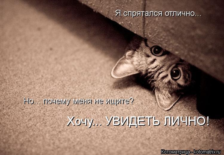 Котоматрица: Хочу... УВИДЕТЬ ЛИЧНО! Я спрятался отлично... Но... почему меня не ищите?
