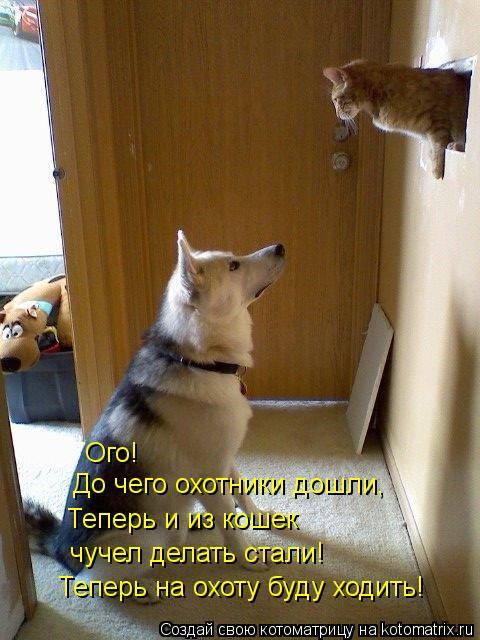 Котоматрица: Ого! До чего охотники дошли, Теперь и из кошек чучел делать стали! Теперь на охоту буду ходить!