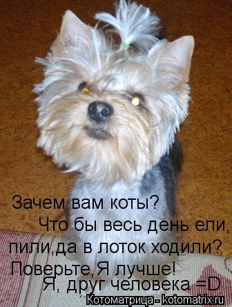 Котоматрица: Зачем вам коты? Что бы весь день ели, пили,да в лоток ходили? Поверьте,Я лучше! Я, друг человека =D