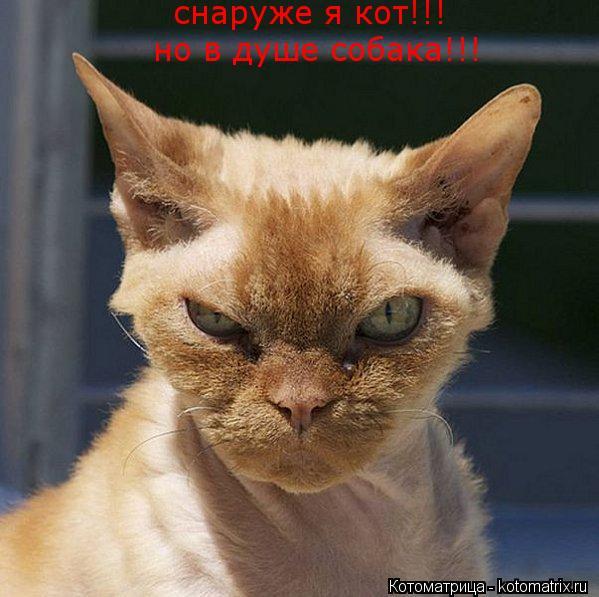 Котоматрица: снаруже я кот!!! но в душе собака!!!