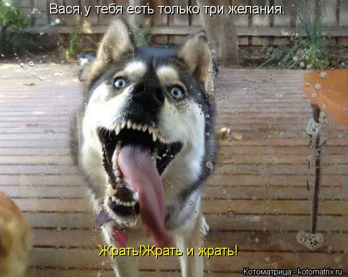 Котоматрица: Вася,у тебя есть только три желания. Жрать!Жрать и жрать!