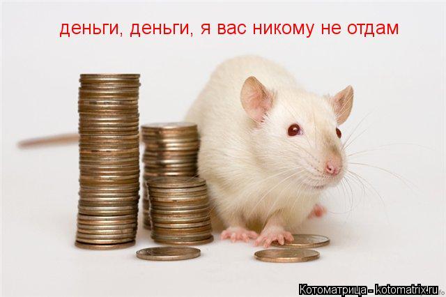 Котоматрица: деньги, деньги, я вас никому не отдам