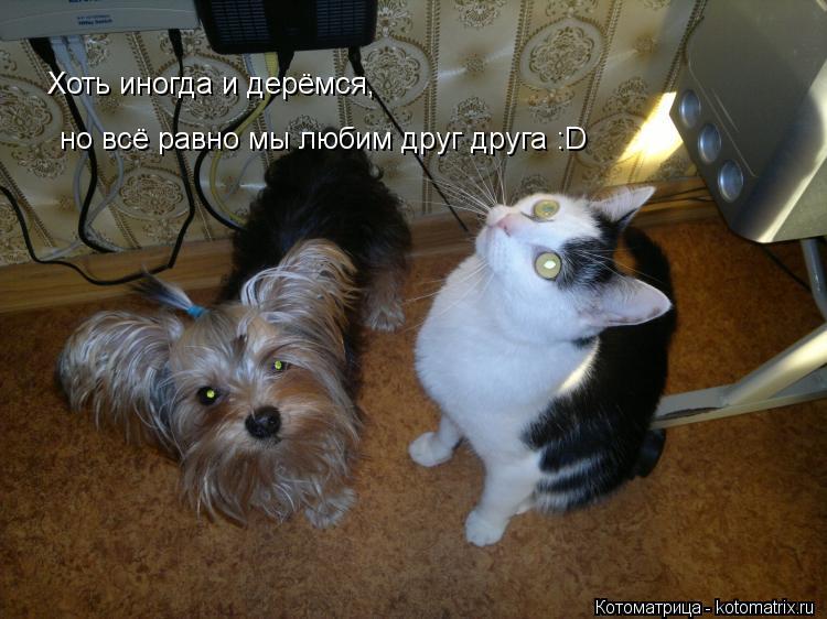 Котоматрица: Хоть иногда и дерёмся, Хоть иногда и дерёмся, но всё равно мы любим друг друга :D но всё равно мы любим друг друга :D