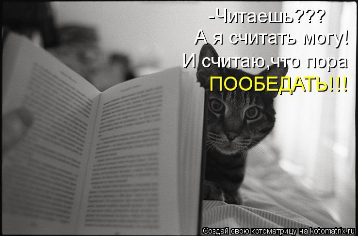 Котоматрица: -Читаешь??? А я считать могу! И считаю,что пора  ПООБЕДАТЬ!!!