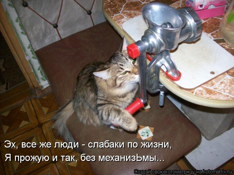 Котоматрица: Эх, все же люди - слабаки по жизни, Я прожую и так, без механизЬмы...