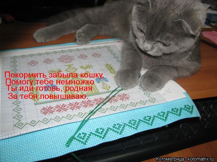 Котоматрица: Покормить забыла кошку, Помогу тебе немножко Ты иди готовь, родная За тебя повышиваю.