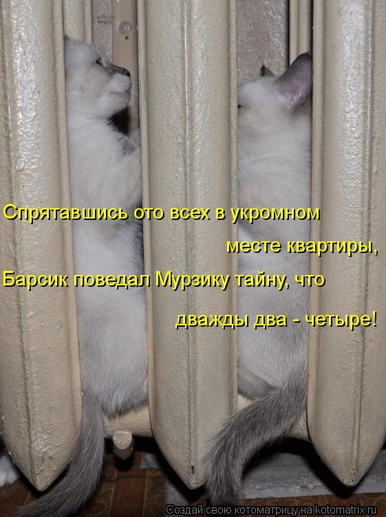 Котоматрица: Спрятавшись ото всех в укромном месте квартиры, Барсик поведал Мурзику тайну, что дважды два - четыре!