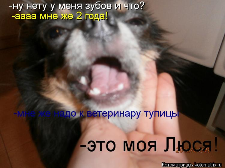 Котоматрица: -ну нету у меня зубов и что? -аааа мне же 2 года! -мне же надо к ветеринару тупицы -это моя Люся!