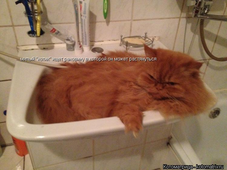 """Котоматрица: милый """"котик"""" ищет раковину в которой он может растянуться"""