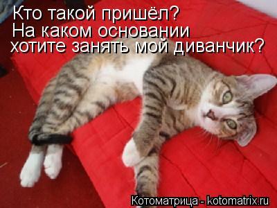 Котоматрица: Кто такой пришёл? На каком основании хотите занять мой диванчик?
