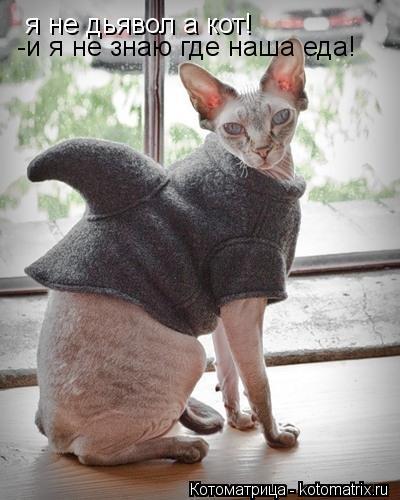 Котоматрица: я не дьявол а кот! -и я не знаю где наша еда!