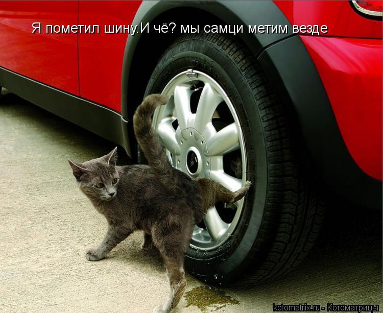 Котоматрица: Я пометил шину.И чё? мы самци метим везде