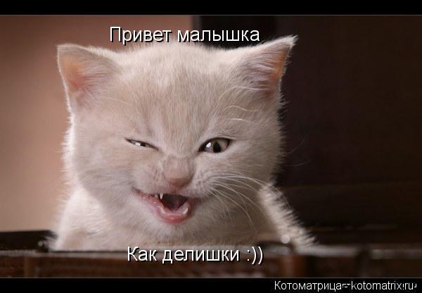 Котоматрица: Привет малышка Как делишки :))