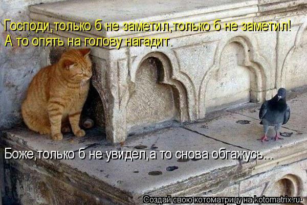 Котоматрица: Господи,только б не заметил,только б не заметил! А то опять на голову нагадит. Боже,только б не увидел,а то снова обгажусь...