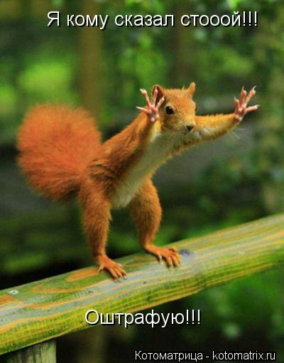 Котоматрица: Я кому сказал стооой!!! Оштрафую!!!